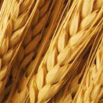 Lavorazione cereali